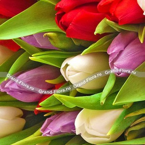 Весна на ладонях - букет из разноцветных тюльпановНеобыкновенно свежее и оригинальное цветовое сочетание. Белоснежное обаяние тюльпанов, дополнено аккордами загадочных сиреневых бутонов и красно-страстными нотами. Как и полагается шедевру, букет незабываемо красив!...<br>