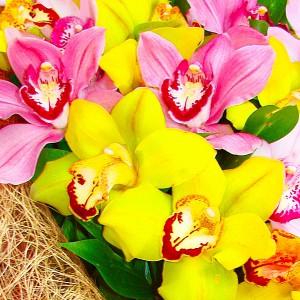 Нежная орхидея - букет из орхидейАх, сколько романтизма и невинности в этой композиции из желто- розовых орхидей. Волнующий аромат, изысканная форма, роскошное сочетание – идеальны для подарка сильной, но в тоже время тонко чувствующей личности....<br>