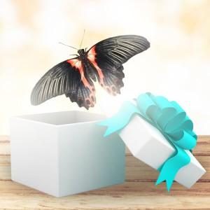 Бабочка Парусник РумянцеваПарусник Румянцева (Papilio rumanzovia). Ареал обитания бабочки: Индонезия, Филиппины, Борнео, Ява, Суматра, Сулавеси. Размах крыльев 12 — 14 см. Такой подарок будет радовать близкого вам человека еще на протяжении 2-3 недель. Дома бабочки...<br>