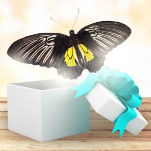 Бабочка Золотая ПтицекрылкаЗолотая Птицекрылка (Troides Rhadamantus). Ареал обитания: Южная Азия. Размах её крыльев - около 14 - 16 см. Изысканное сочетание яркого золотисто-желтого цвета с благородным черным бархатом — именно так выглядит эта роскошная бабочка. Полет ст...<br>