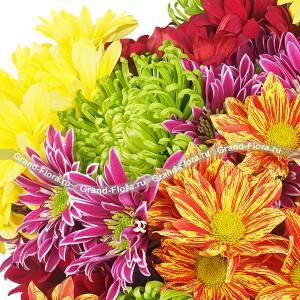 Осенний блюз - букет из разноцветных хризантемКто сказал, что хризантема – это довольно простой и весьма заурядный цветок? Если вы посмотрите на букет из хризантем Осенний блюз, то поймете, почему этот цветок у японцев является культовым. Хризантема - это маленькое солнышко, а букет хризантем ...<br>