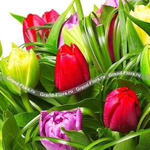 ЭйфорияФееричные цвета этого букета из тюльпанов способны улучшить настроение на 100%!!! Закажите его в праздник или в будний день, маме или жене, бизнес партнеру или просто понравившейся девушке, в любом случае о Вас вспомнят с самыми теплыми чувства...<br>