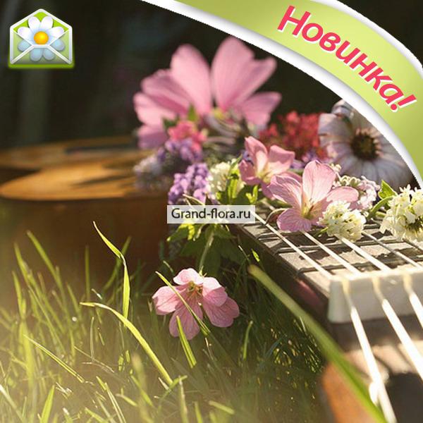 Мастер-класс игры на гитаре от Grand-Flora.ru