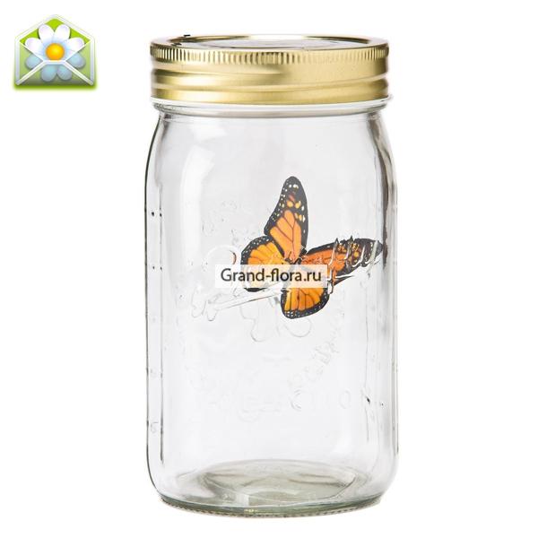 Бабочка в банке Желтый парусник от Grand-Flora.ru