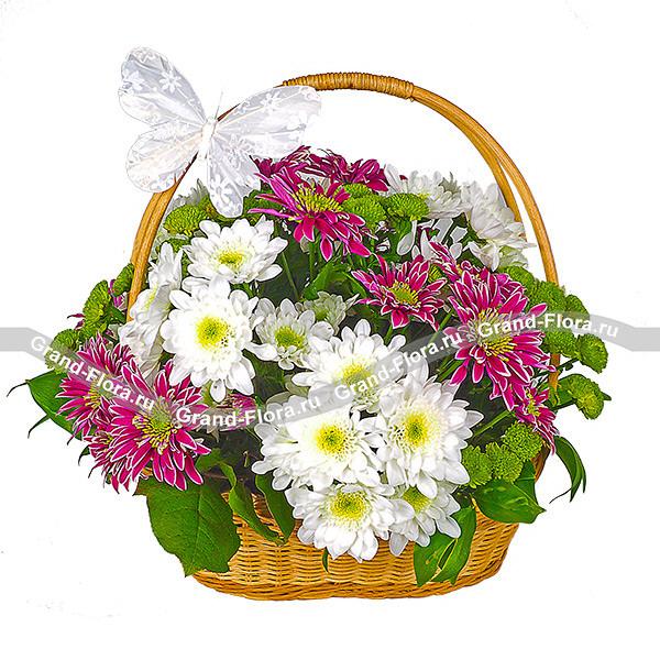 Красивая сочетания разных цветов хризантемы в корзине
