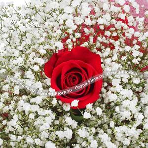 Красная роза - Любовь принца...<br>