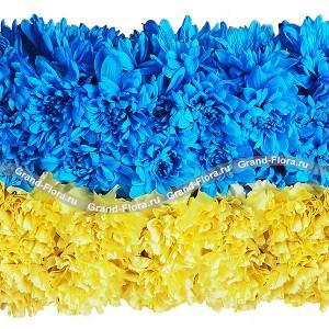 Украина - композиция в виде флага из гвоздик и хризантем...<br>