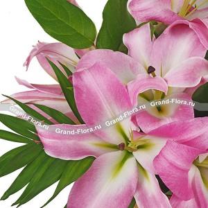 Розовый фреш - корзина из розовой лилии...<br>