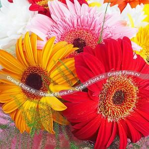 Глория - букет из разноцветных гербер и хризантемы...<br>