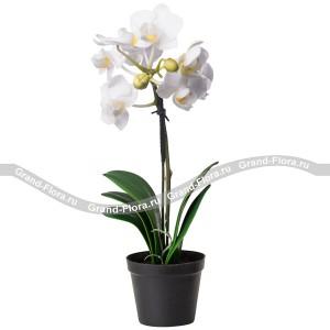 Букет из цветов Белая