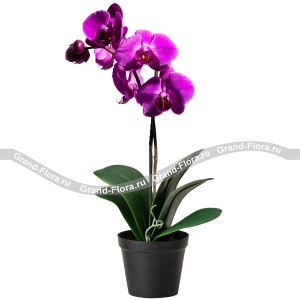 Букет из цветов Фиолетовая