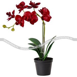 Букет из цветов Бордовая