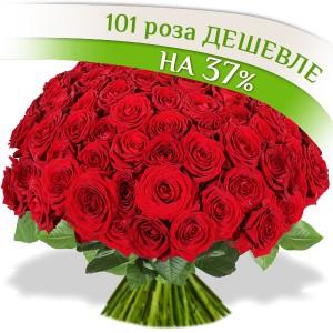 101 роза...<br>