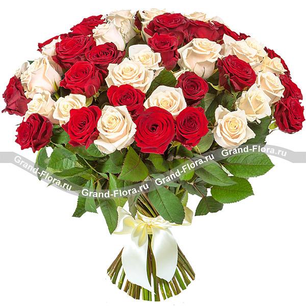 101 бело-красная роза (70 см)