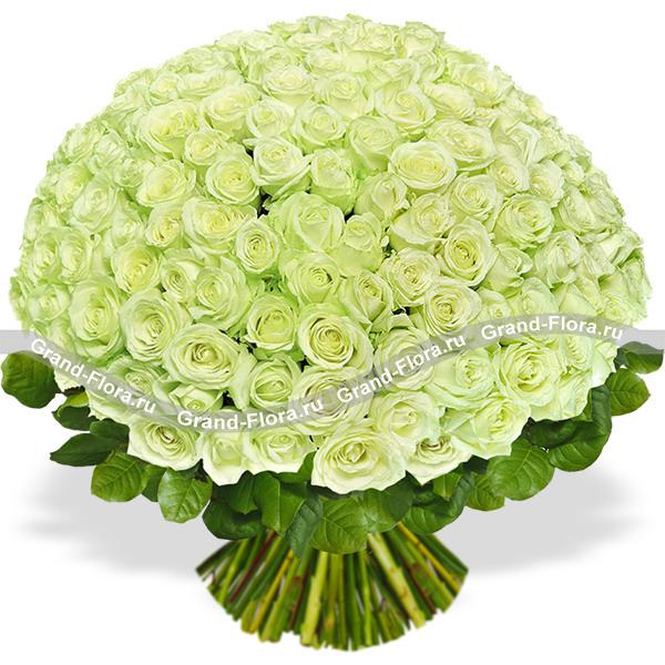 101 зеленая роза (70 см)