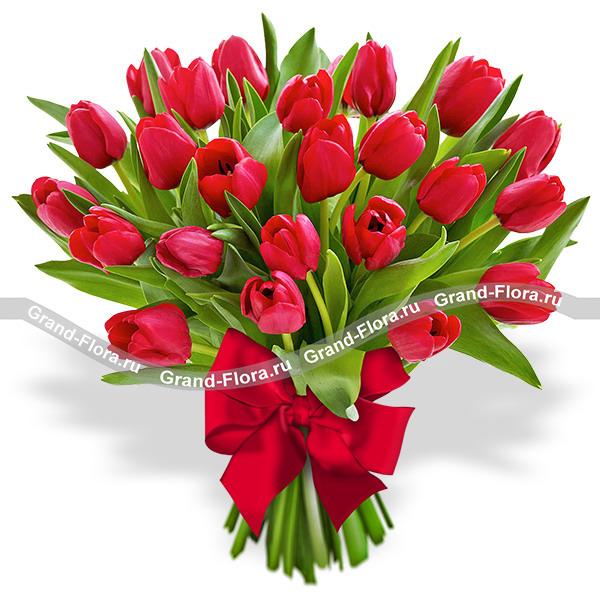 Тюльпаны Гранд Флора 25 красных тюльпанов фото