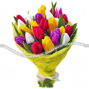 25 тюльпанов Разноцветные...<br>