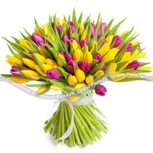 101 желто-фиолетовый тюльпанТюльпан – это нежный и хрупкий цветок, который способен покорить своей красотой даже самое неприступное и ледяное сердце. А огромный букет фиолетовыхтюльпанов может стать для вас началом примирения с любимой девушкой или зажжет страсть в глазах сот...<br>