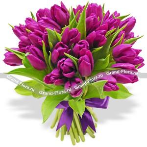 СеренадаТюльпан – это нежный и хрупкий цветок, который способен покорить своей красотой даже самое неприступное и ледяное сердце. А огромный букет фиолетовыхтюльпанов может стать для вас началом примирения с любимой девушкой или зажжет страсть в глазах сот...<br>