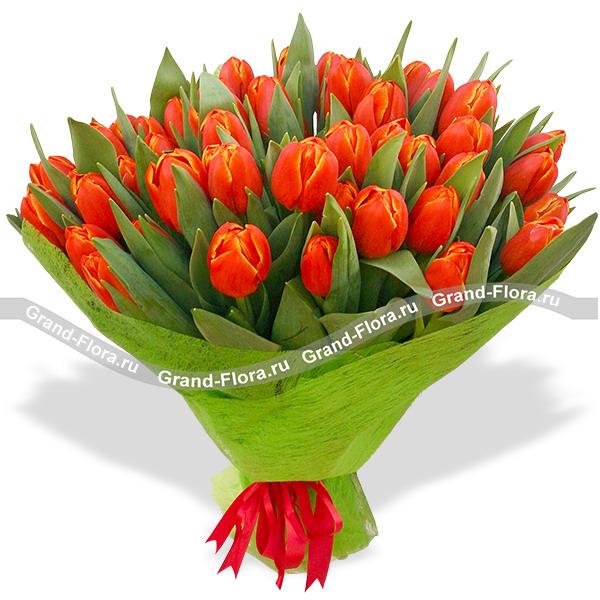 Тюльпаны Гранд Флора 35 тюльпанов