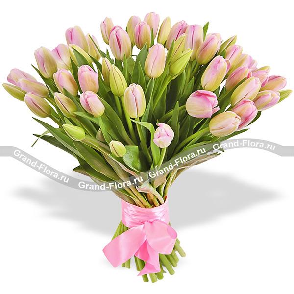 51 нежно-розовый тюльпан