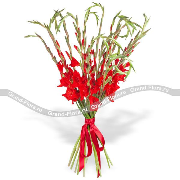 Кармен - букет из красных гладиолусов