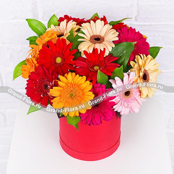 Новинки Гранд Флора Неотразимой - коробка с разноцветными герберами фото