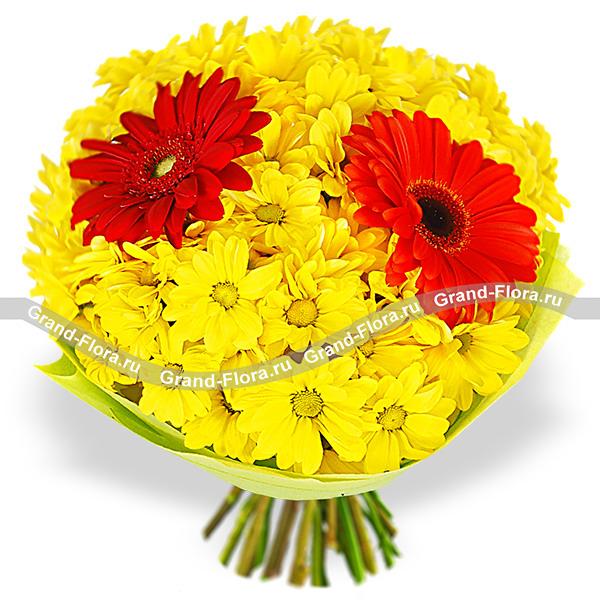 Цветы Гранд Флора Он и она - букет из хризантемы и герберы (акционное предложение) фото