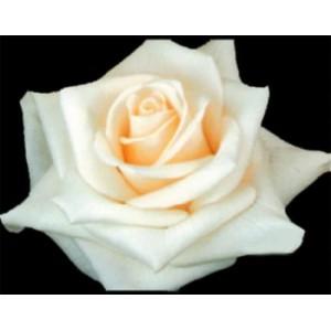 Роза Близзард(Blizzard)Роза Близзард представлен на сайте доставки цветов grand-flora.ru в ознакомительных целях. Если вы хотите заказать букет цветов из роз Близзард просим уточнить наличие данного цветка  у консультанта по тел.:<br> +7 (988) 744-46...<br>