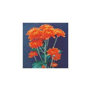 FalmaХризантема Falma представлен на сайте доставки цветов grand-flora.ru в ознакомительных целях. Если вы хотите заказать букет цветов из хризантем Falma просим уточнить наличие данного цветка  у консультанта по тел.:<br> +7 (988) ...<br>