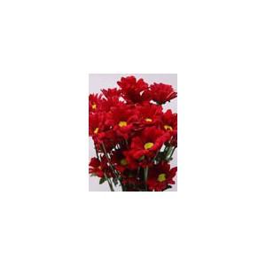 RelanceХризантема Relance представлен на сайте доставки цветов grand-flora.ru в ознакомительных целях. Если вы хотите заказать букет цветов из хризантем Relance просим уточнить наличие данного цветка  у консультанта по тел.:<br> +7 (9...<br>