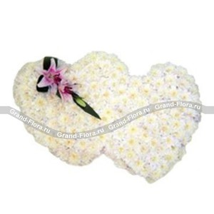 Любящие сердцаЭти два белоснежный сердца бьются в унисон только для вас!<br>Вы не знаете, что подарить любимой в День Валентина? Композиция в виде сердец из хризантем – это прекрасный подарок, увидев который она поймет все без слов. При этом такие сердца с хризант...<br>