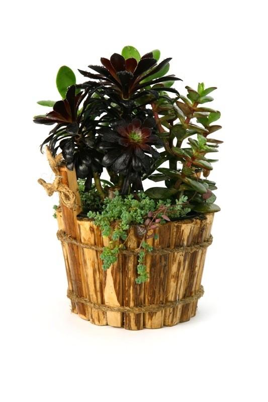 Комнатные растения Гранд Флора Цветочная кадка фото