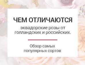 Чем отличаются розы разных стран