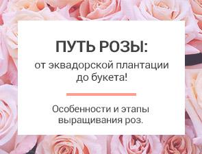 Путь розы