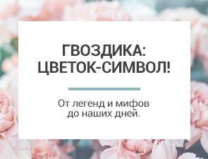 Гвоздика: цветок-символ!