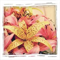 Магазин цветов Grand-Flora