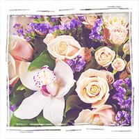 Заказать орхидеи в Тольятти