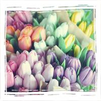 Купить тюльпаны в орле заказ и доставка цветов в америку