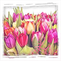 заказать букет разноцветных тюльпанов