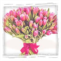 51 тюльпан с бесплатной доставкой